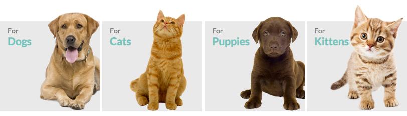 vetsure-pets