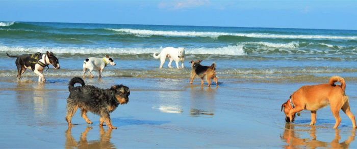 10 ways to keep your dog cool on the beach