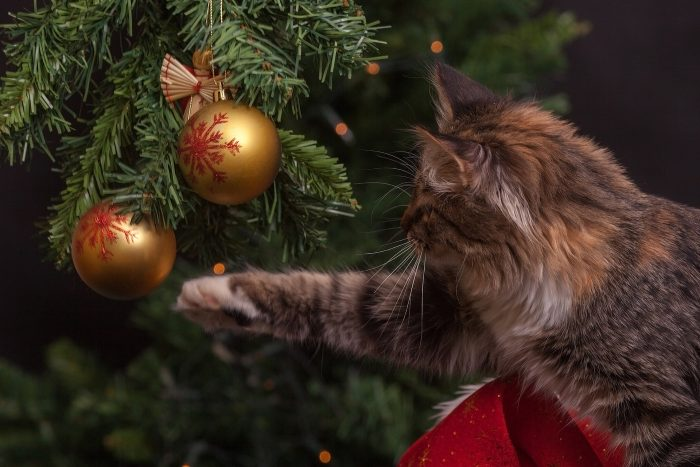 Our Top 10 Tips for Avoiding Christmas Hazards with your Pet