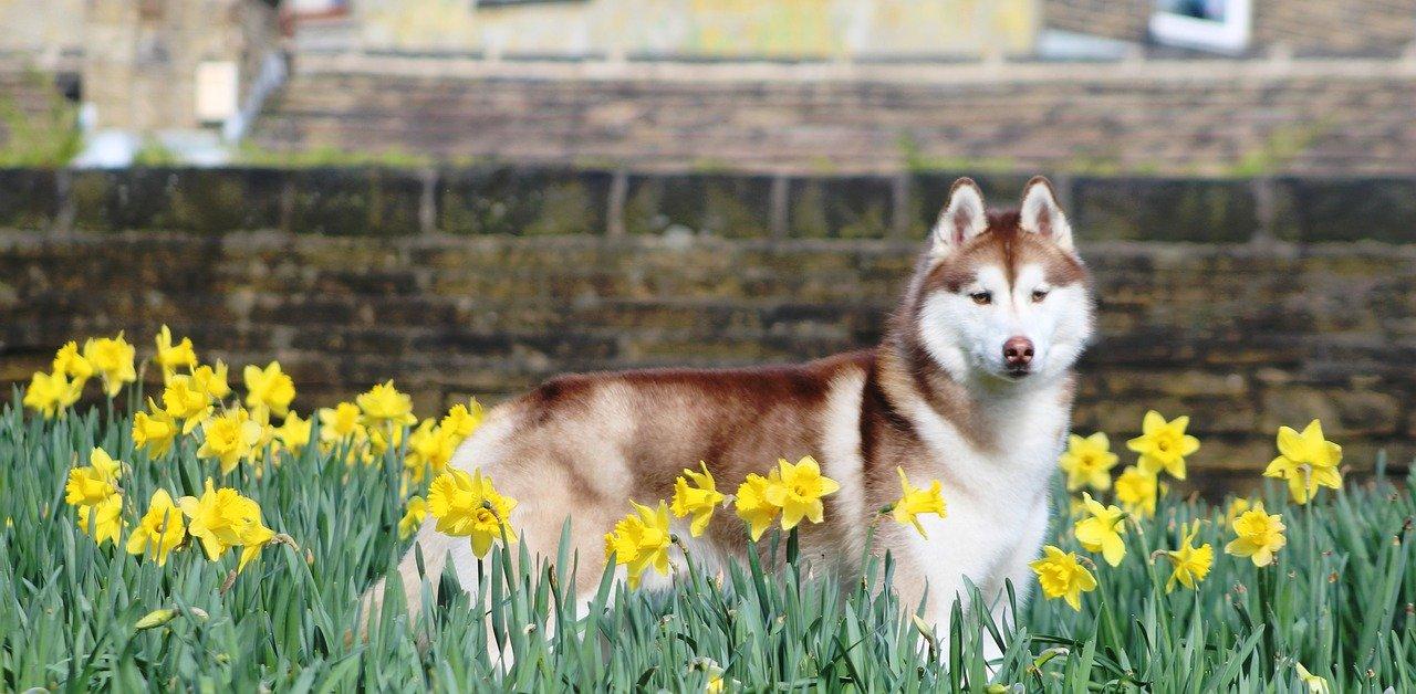 Springtime Dangers