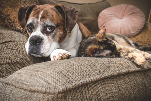 Looking After Senior Pets